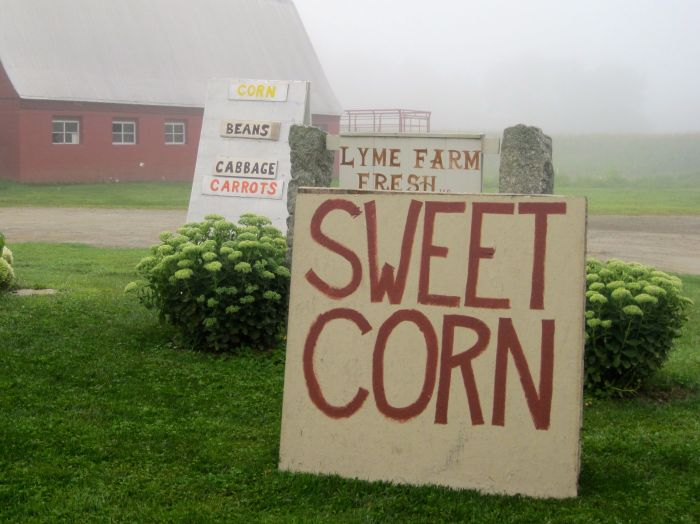 Lyme farmstand in morning fog